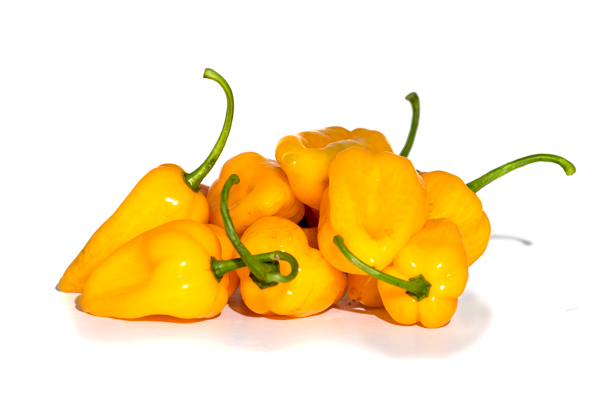 ?filename=Yellow_habanero